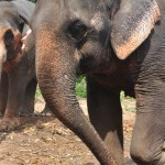 Elephant Tour – Elephant Training Course Booking